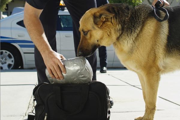 canine drug searches,canine drug searches lawyer,canine drug searches attorney,canine drug searches oklahoma